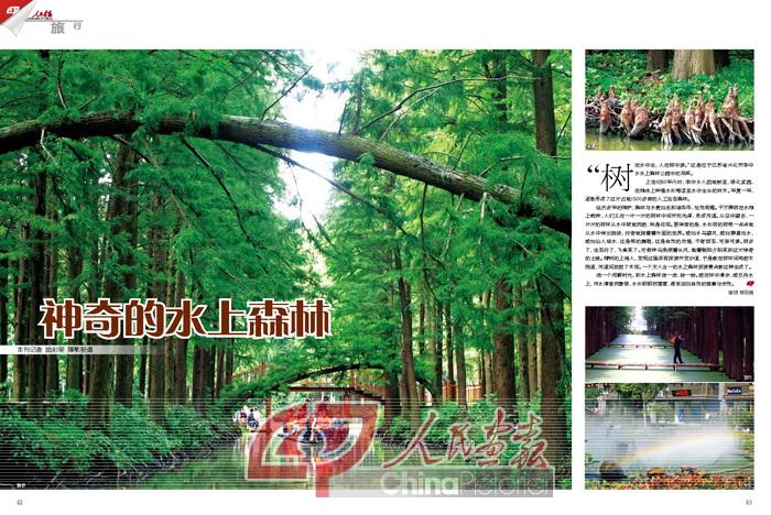 兴化水上森林照片