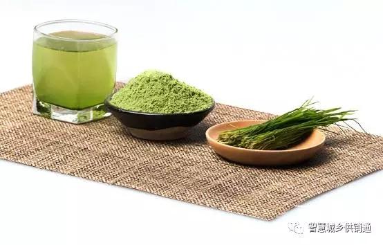 兴化特产大麦若叶青汁粉