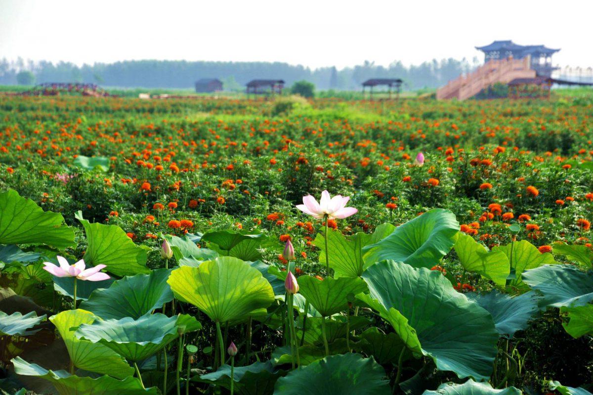 太美兴化_小程序 简直就是导游伴侣啊 Beautiful Xinghua Mina Online